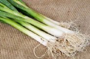 Onion Guardsman - Spring onion - Appx 1000 seeds
